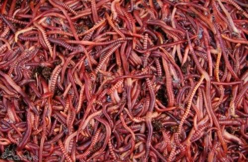 Сонник черви в теле к чему снится черви в теле во сне