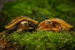 Сонник черепаха к чему снится черепаха во сне