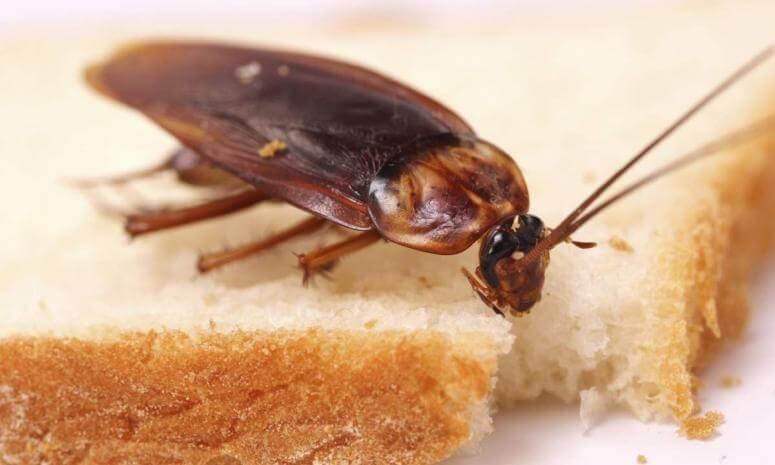 К чему снится много живых тараканов в квартире
