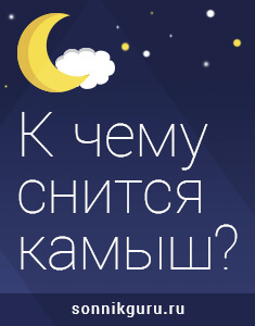 к чему снится камыш
